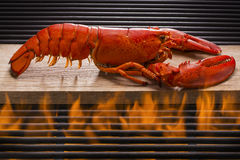 Fresh Lobster Over a Hot Flaming Barbecue Grill. Fresh red lobster on a wood plank over a hot flaming barbecue grill Royalty Free Stock Photos
