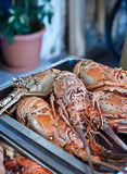 Fresh lobster plate. Image of fresh cooked lobsters displayed on plate Royalty Free Stock Photo