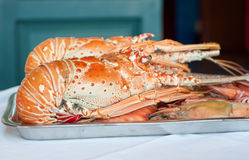 Fresh lobster plate. Image of fresh cooked lobsters displayed on plate Stock Photography