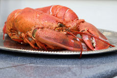 Fresh Lobster Preparation Stock Images