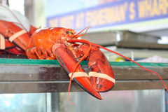 Fresh lobster for sale at outdoor market Stock Photography