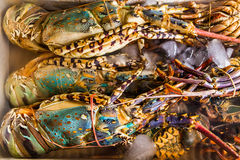 Fresh lobster at the seafood market Stock Images