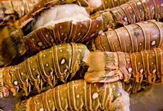 Fresh Lobster Tails Stock Image