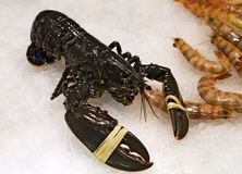 Fresh lobster Royalty Free Stock Photography