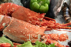 Fresh Lobsters. On ice with peppers and other seafood Stock Photos