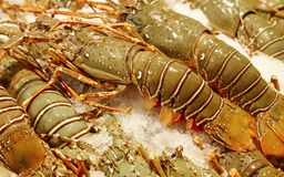 Fresh lobsters Royalty Free Stock Image