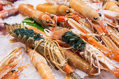 Fresh lobsters with eggs Royalty Free Stock Images