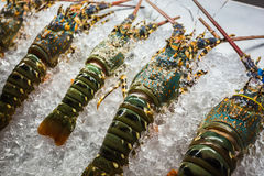 Fresh lobsters on ice Stock Photo