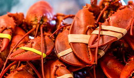 Fresh Lobsters for Sale. A collection of fresh lobsters for sale at a Fish market stock images