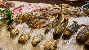 Fresh lobsters and shrimps. Stock Images