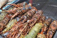 Fresh lobsters sold at night market in Kota Kinabalu. Sabah Royalty Free Stock Photography