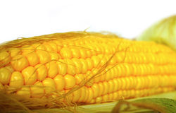 Fresh local organic corn Stock Photo