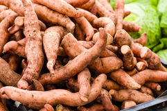 Fresh local sweet potatoes at the market Stock Images