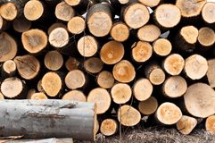 Fresh logs. Of wood piled up royalty free stock photos