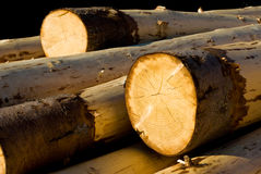 Fresh logs Stock Images