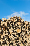 Fresh logs. Royalty Free Stock Images