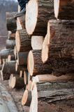 Fresh logs of wood piled up. With blurry background royalty free stock photo