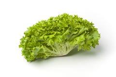 Fresh Lollo bionde lettuce Stock Photography