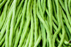 Fresh long beans background. The fresh long beans background Stock Image