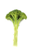 Fresh long and lean  broccoli in closeup Royalty Free Stock Photos