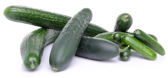 Fresh long and mini cucumbers Stock Image