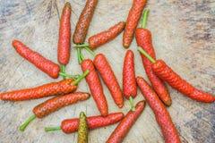 Fresh long pepper Stock Images