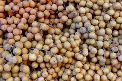 Fresh Longan Stock Images