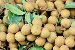 Fresh longan with leaves Stock Photos