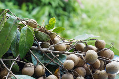 Fresh longan Royalty Free Stock Images