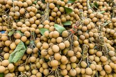 Fresh longan of tropical fruit Stock Images