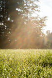 Fresh Look Grassy Field with Sun Rays Royalty Free Stock Photo