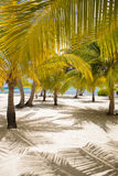 Fresh Look Palm Trees at Beach Stock Photography