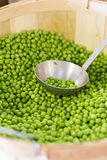 Fresh loose peas in a basket Royalty Free Stock Photo