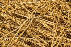 Fresh Loose Thatch Straw Material Stock Photography