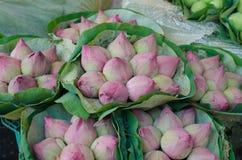 Fresh lotus bud bouquet Royalty Free Stock Photo