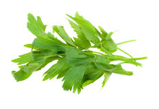 Fresh lovage herb Royalty Free Stock Photo