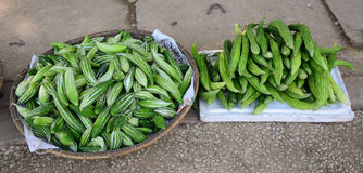 Fresh luffa aegyptiaca in wicker basket in Moc Chau highland Royalty Free Stock Photo