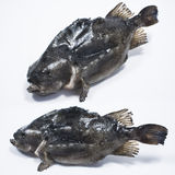 Fresh Lumpfish Stock Photos
