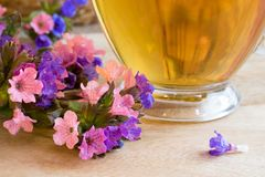 Lungwort pulmonaria flowers with a cup of lungwort tea stock images