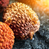 Fresh lychee fruit Royalty Free Stock Photography