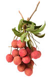 Fresh lychee (Litchi chinensis) Royalty Free Stock Images