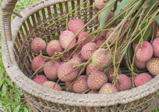 Fresh lychee in straw basket on the green grass Stock Images
