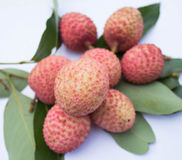 Fresh lychee Royalty Free Stock Photos