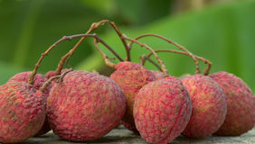 Fresh lychees, Tropical fruit Royalty Free Stock Photography