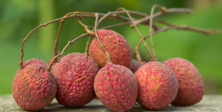 Fresh lychees, Tropical fruit Royalty Free Stock Photos