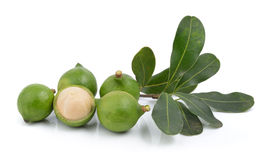 Fresh macadamia nut on white background Stock Photo