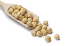 Fresh Macadamia nuts on a spoon Stock Photo
