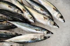 Fresh mackeler fish, market of Madeira Royalty Free Stock Images