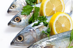 Fresh Mackeral with Lemon Stock Images