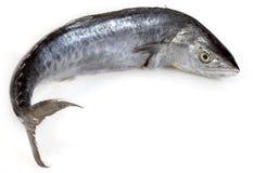 Fresh Mackerel. On White Background Stock Photography